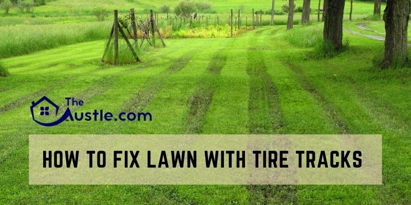 How to Fix Lawn with Tire Tracks