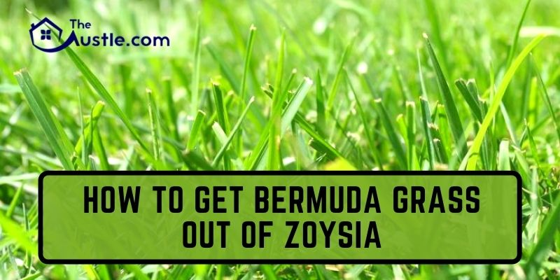 How To Get Bermuda Grass Out Of Zoysia