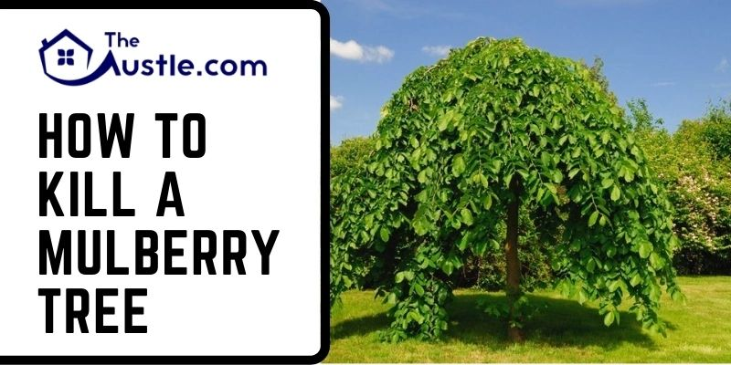 How To Kill A Mulberry Tree