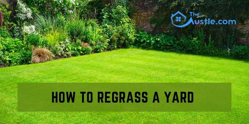 How To Regrass A Yard