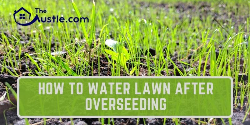 How To Water Lawn After Overseeding