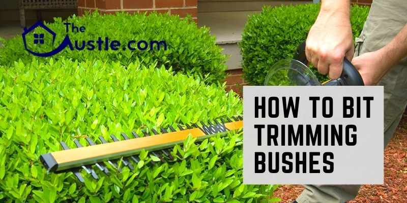 How To Bit Trimming Bushes