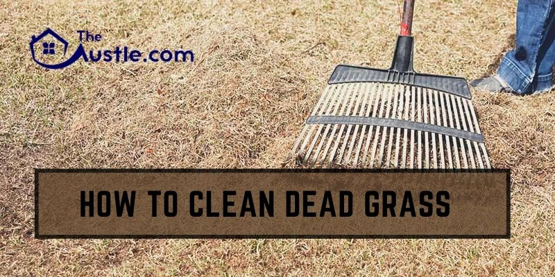 How To Clean Dead Grass