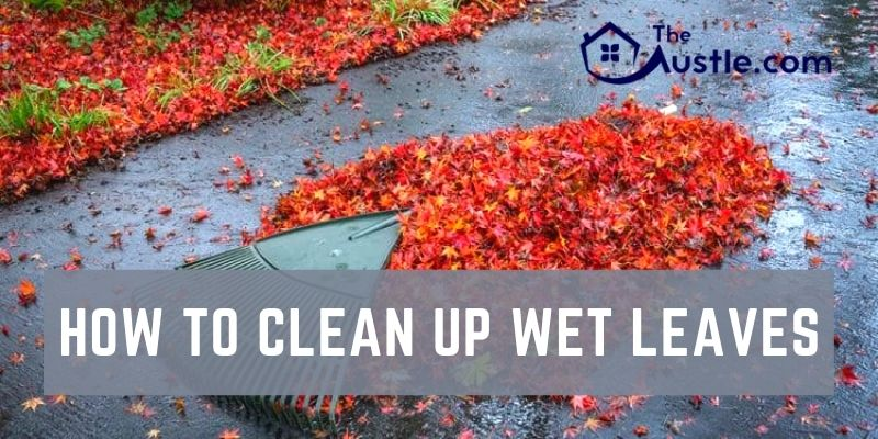 How To Clean Up Wet Leaves
