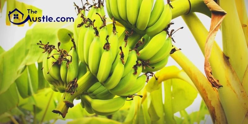 How to Destroy Banana Tree by Hiring Landscaping Companies