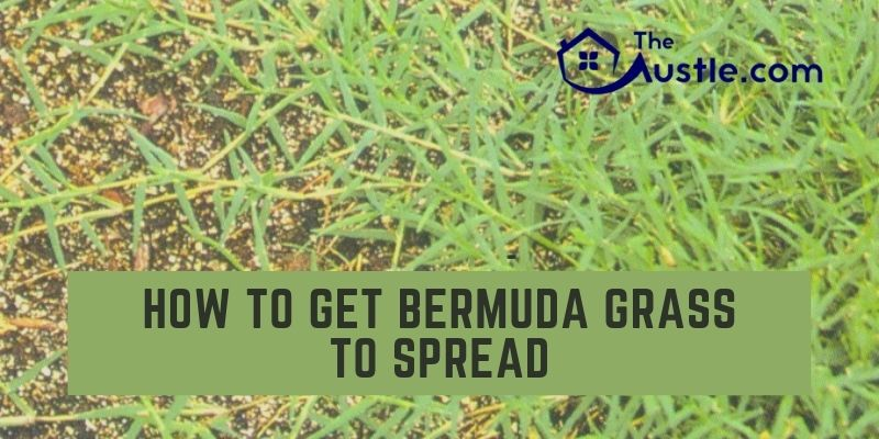 How to Get Bermuda Grass to Spread