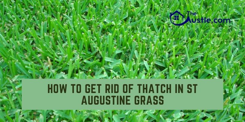 How to Get Rid of Thatch in St Augustine Grass
