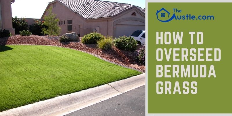How To Overseed Bermuda Grass
