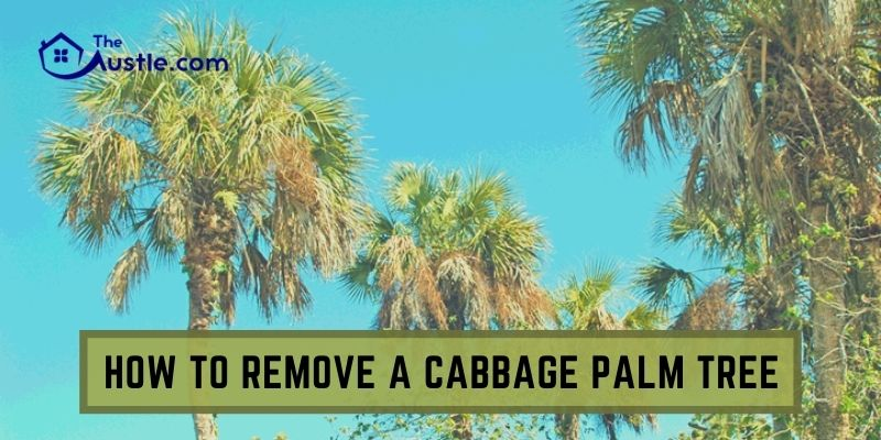 How To Remove A Cabbage Palm Tree