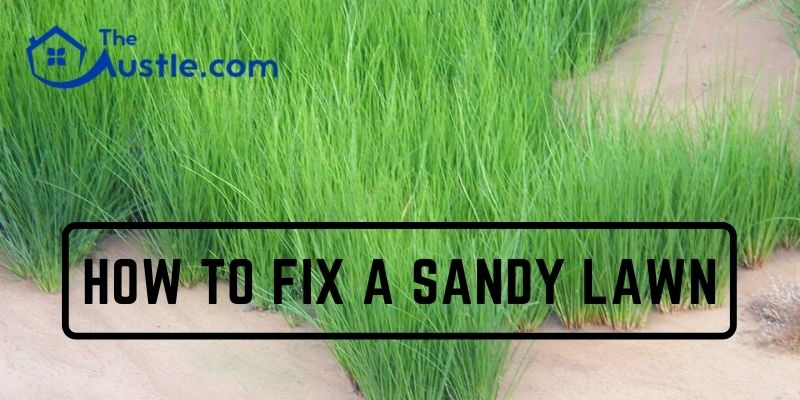 how to fix a sandy lawn