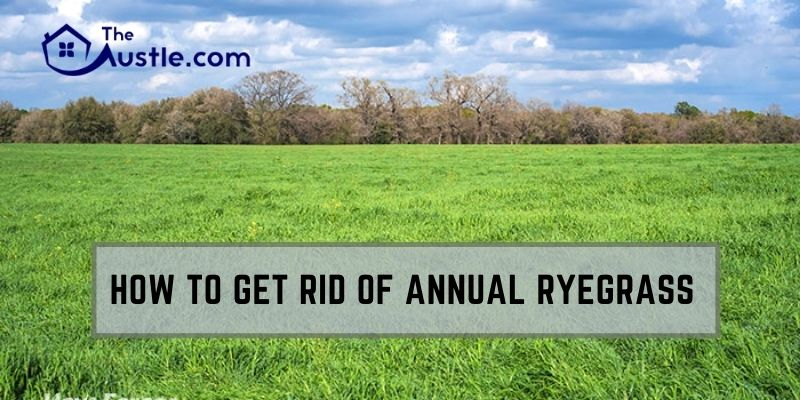 How To Get Rid Of Annual Ryegrass