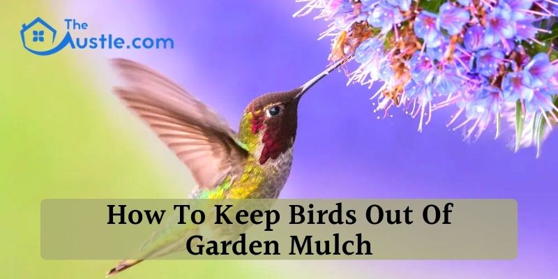 How To Keep Birds Out Of Garden Mulch