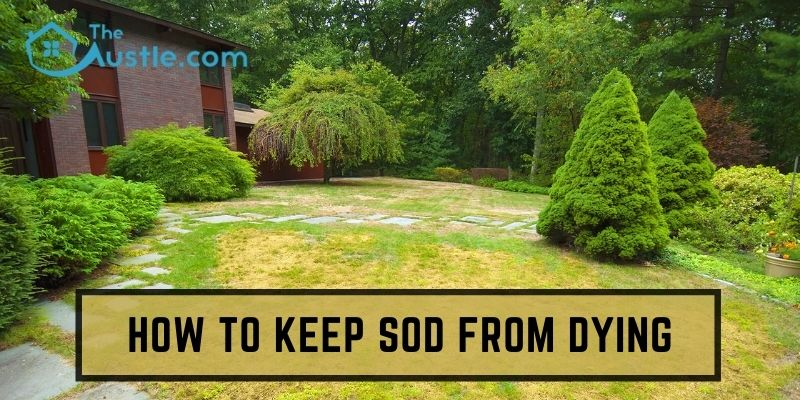 How To Keep Sod From Dying
