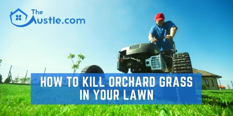 How to Kill Orchard Grass in Your Lawn