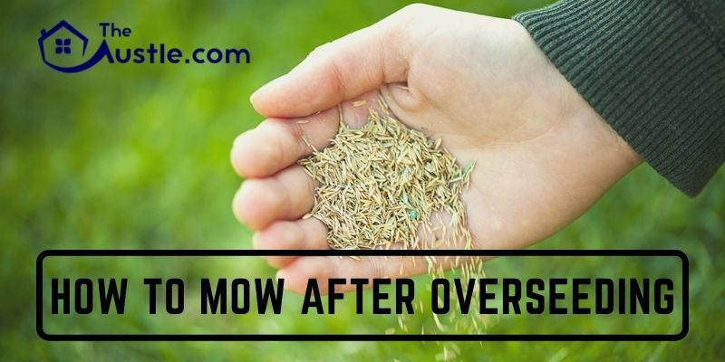 How To Mow After Overseeding