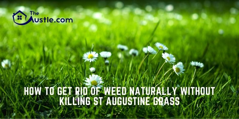 How to Get Rid of Weed Naturally Without Killing ST Augustine Grass
